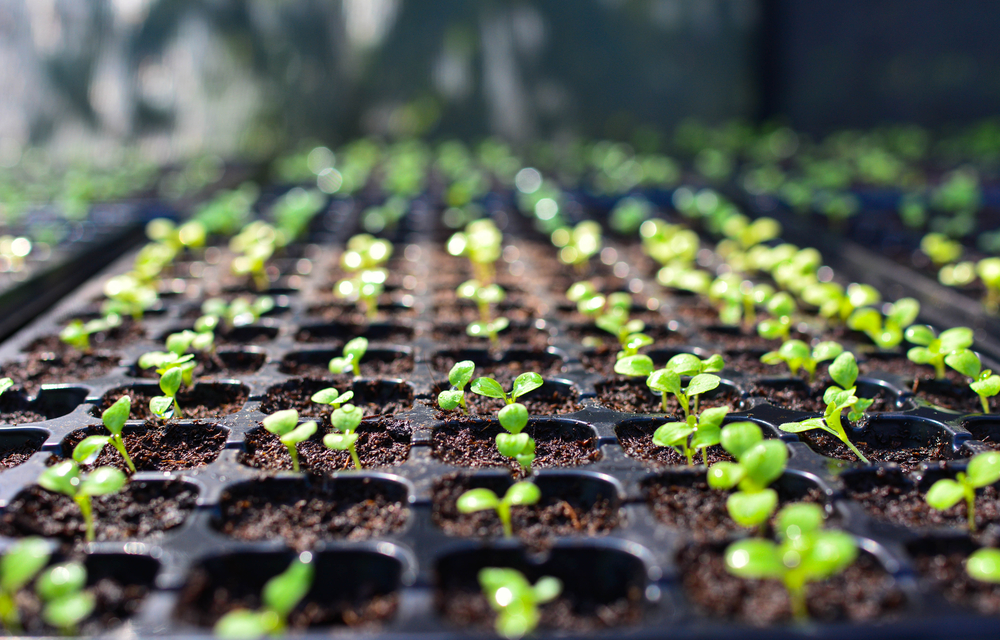 【日本】農水省、改正種苗法での海外持ち出し禁止対象品種を発表。登録品種1702、出願中273 1