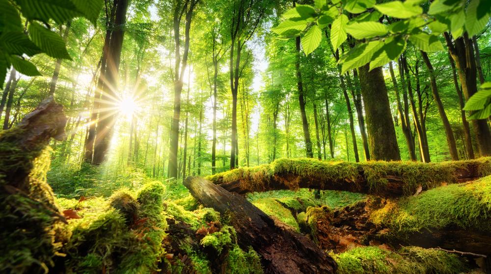 【国際】国連、SEEA生態系勘定のAIツールをリリース。複雑な生態系評価分析が大幅に迅速化 1