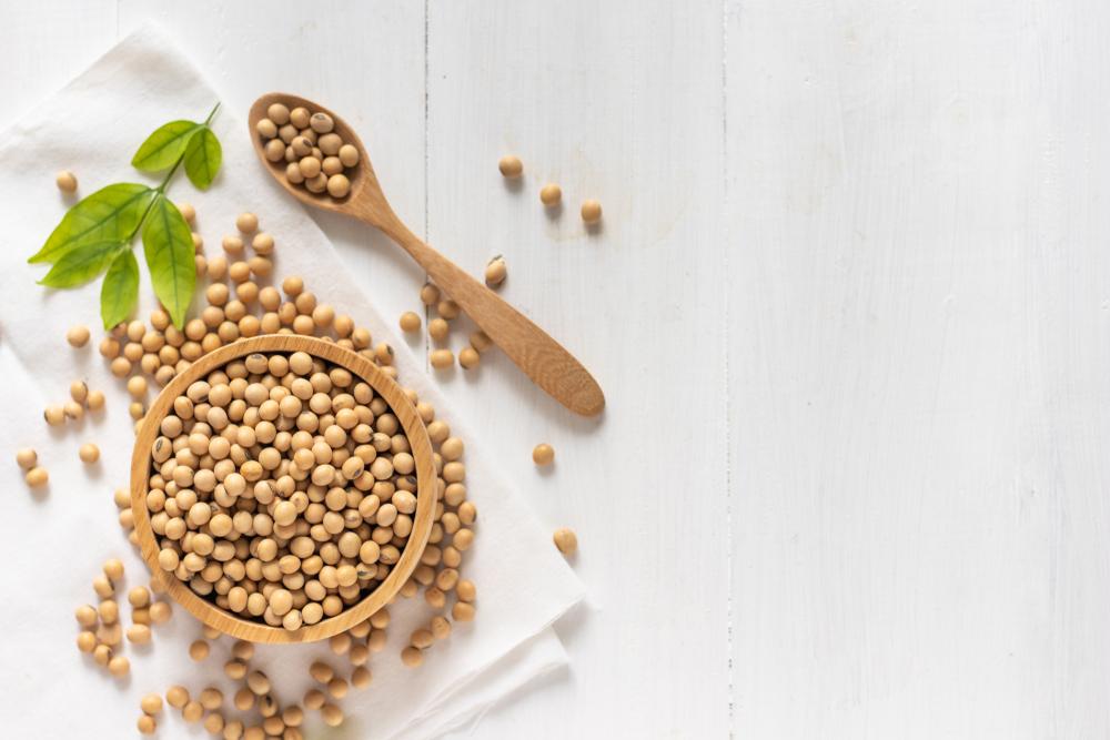 【5/13:ウェビナー】日本市場における持続可能な大豆の達成‐森林伐採ゼロにむけて 1