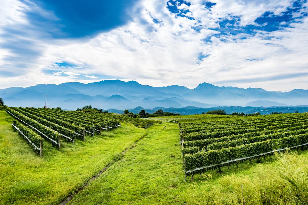 【日本】山梨県、やまなし4パーミル・イニシアチブ農産物等認証制度で初の認証付与 1