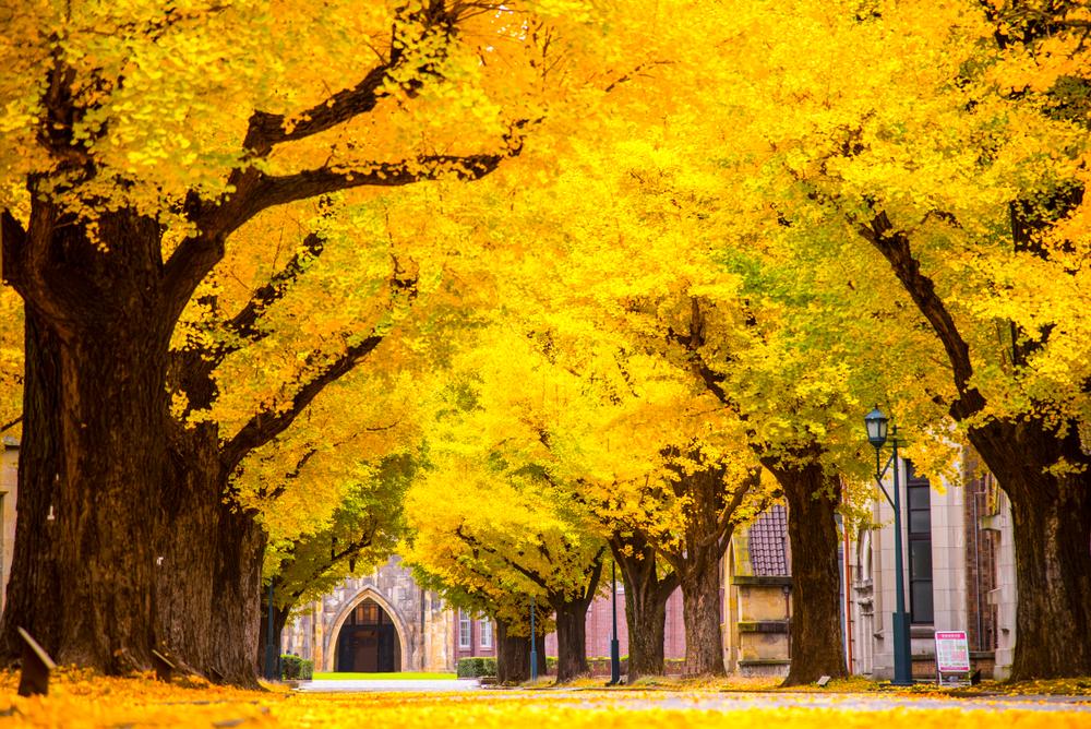 【日本】文科省、経産省、環境省と188の大学、カーボンニュートラル達成に貢献する大学等コアリション設立 1