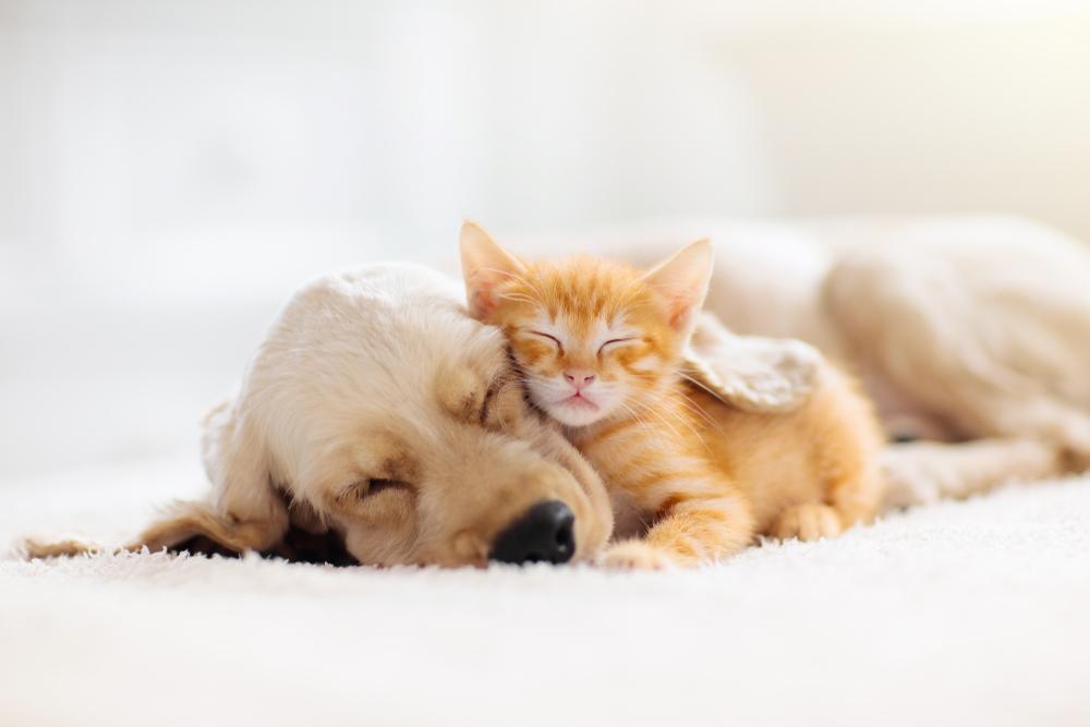 【日本】環境省とアマゾン、犬猫の殺処分防止で提携。新たな飼い主や保護機関のマッチング 1